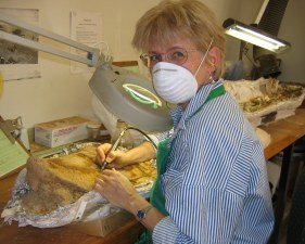 Queensland Museum fossil lab - that's me covered in dust while working on a dinosaur hip bone.