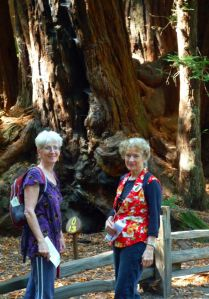 Amongst the 2000+ year-old Redwood giants.