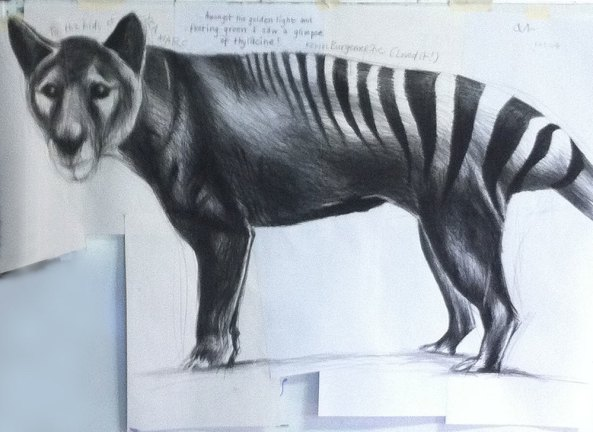 I love thylacines, which is why I chose this image of Kevin's for the blog.